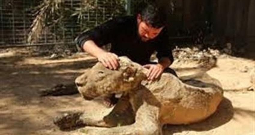 4cd72d111 مالك حديقة بغزة يعرض حيواناته للبيع لإنقاذهم من الجوع - السبيل