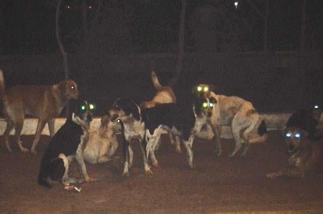 نتيجة بحث الصور عن كلاب ضالة مسعورة